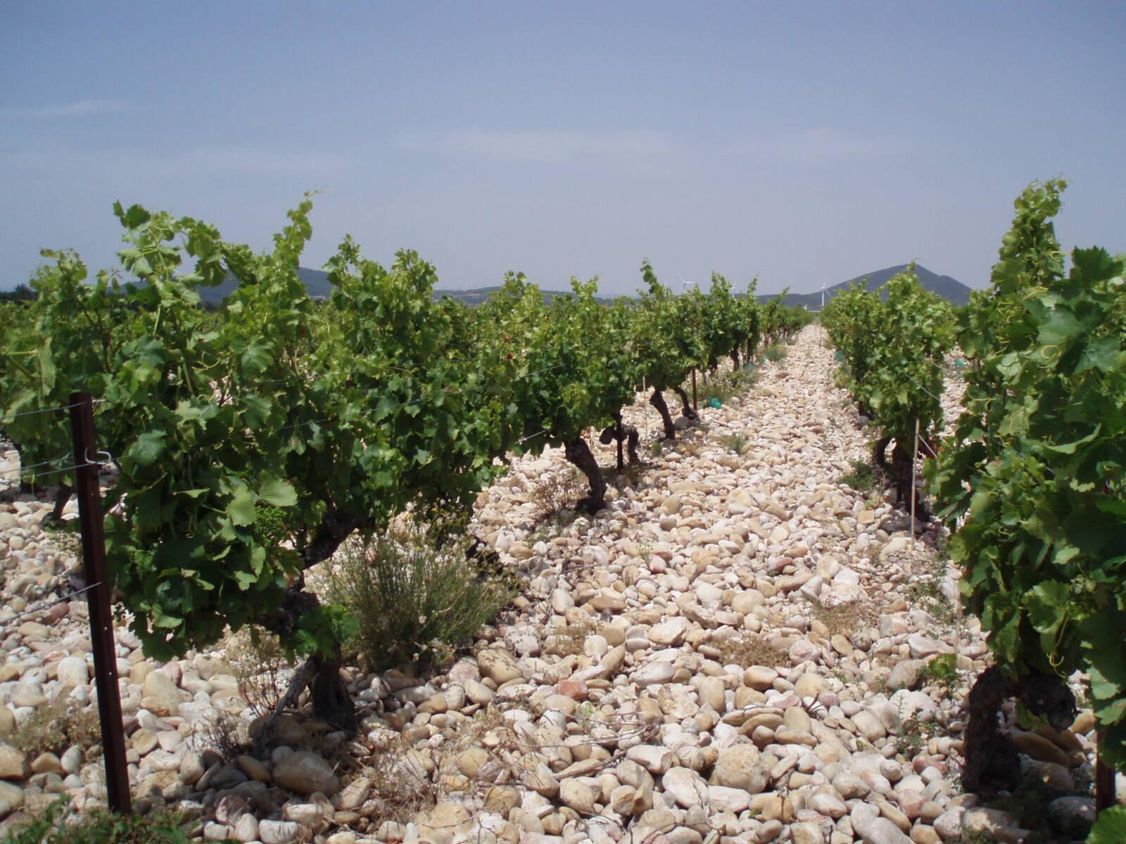 vignes granges gontardes