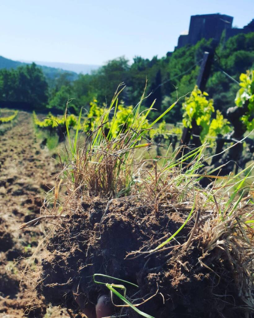 biodynamic root system developed